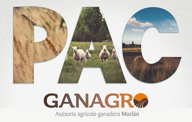 Nace GANAGRO, la Asesoría agrícola – ganadera Morlán